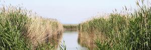 Weiden am See