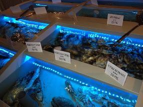 """Seafoodbar """"Рыба и Крабы"""""""