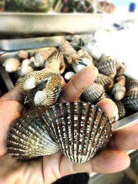 sub seafood