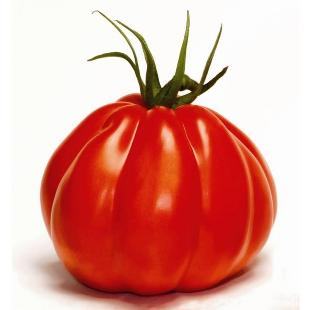 Tomatteo